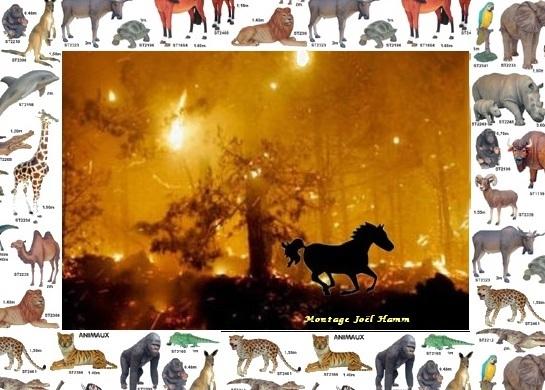 incendie cheval